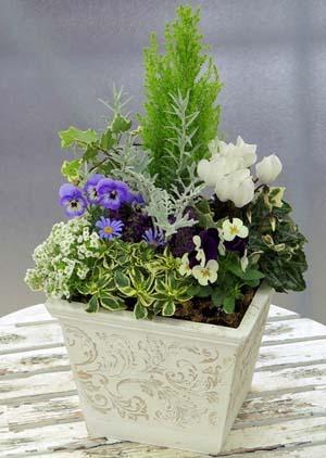 花の寄せ植えに、コツがあります!その方法などを調べてみます!のサムネイル画像