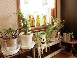 観葉植物の飾り方☆オシャレに見える飾り方を大研究しました☆のサムネイル画像