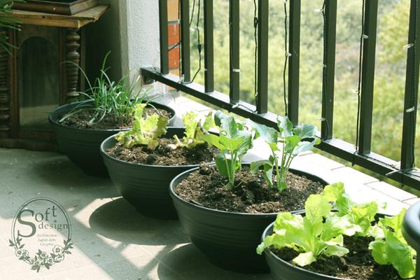 ベランダで簡単栽培♪プランターを使った家庭菜園に挑戦のススメ!のサムネイル画像