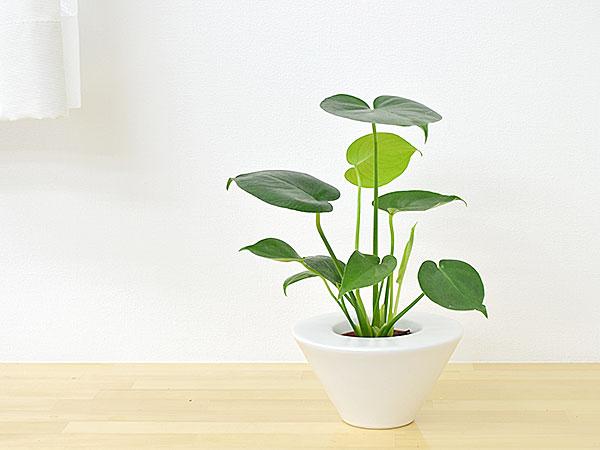 部屋をスタイリッシュに彩るスタイリッシュな観葉植物たち4選!のサムネイル画像