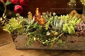 植物を、プランターで植栽してください。上手く育てましょう!のサムネイル画像