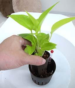 観葉植物を長く楽しむために必要な植え方・植え替えの方法とは?のサムネイル画像