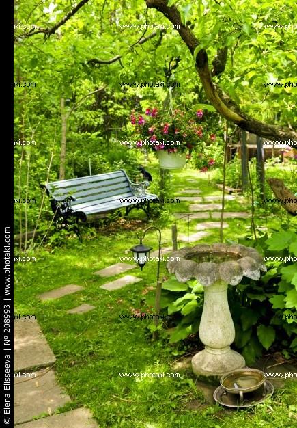 癒しの植物と始める共同生活。相棒を探す方はこちらのランキングをのサムネイル画像