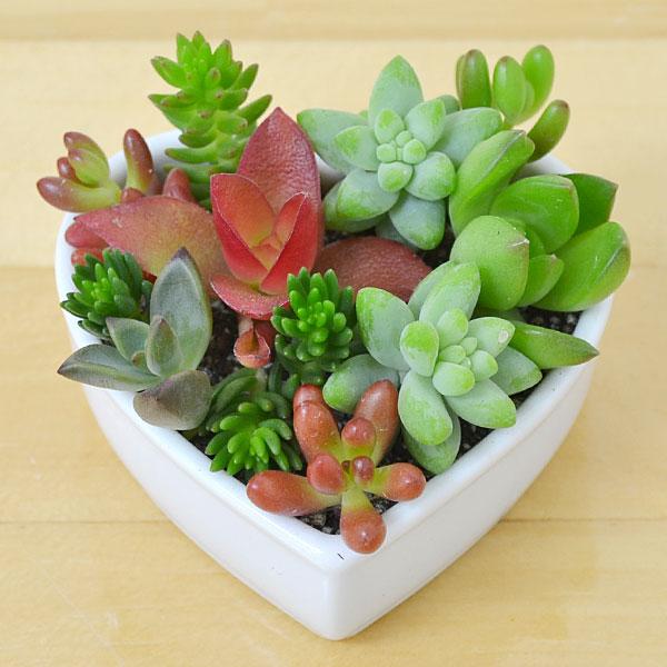 多肉植物を、楽しむための容器は、どの様なものがいいでしょう?のサムネイル画像