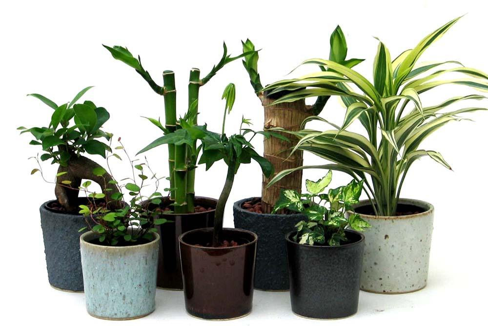 失敗しないプランター選びで観葉植物がお部屋のインテリアに!のサムネイル画像