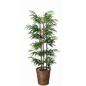昔から縁起物とされる「松竹梅」の竹、鉢植えで育ててみませんか?のサムネイル画像