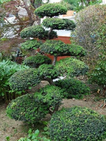 立体感のあるおしゃれな庭に欠かせない、人気の庭木の選び方のサムネイル画像