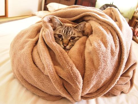 寒い冬には包まって眠りたい☆おすすめの毛布を紹介します☆のサムネイル画像