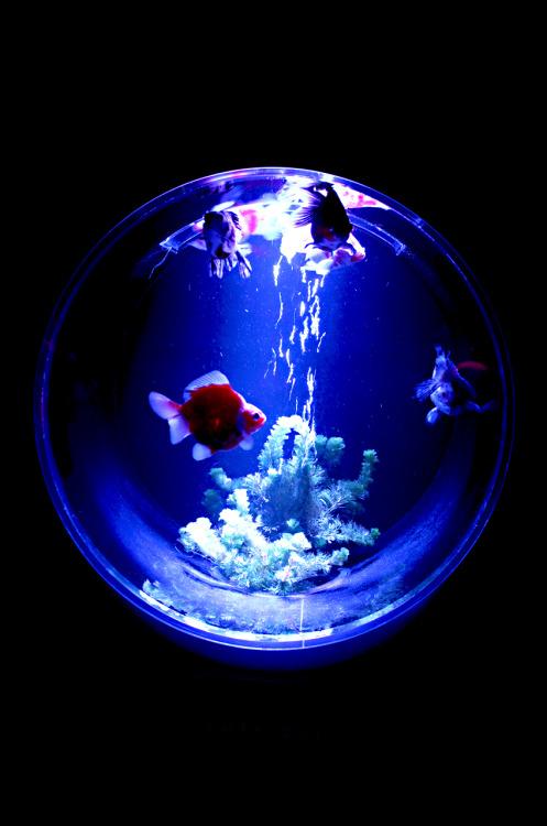 水槽をおしゃれにして癒されよう!おしゃれ水槽&レイアウト特集のサムネイル画像