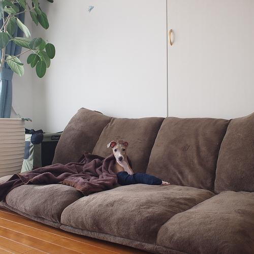 ソファを座椅子として、利用してますか?その逆もあるでしょうね!のサムネイル画像