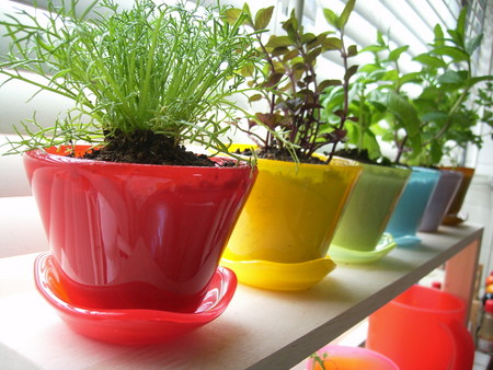 心の癒しの植物をおしゃれな植木鉢でステキにかざりませんか?のサムネイル画像