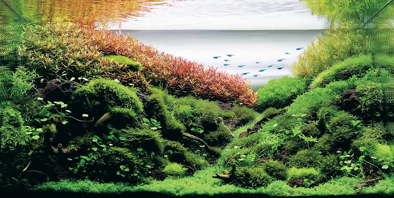 オシャレ女子に人気のアクアリウム*水草を上手に活用しよう!のサムネイル画像