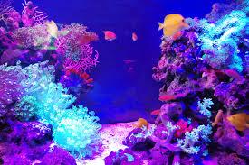 自宅に癒しのアクアリウムを!水槽をレイアウトする基本をご紹介のサムネイル画像
