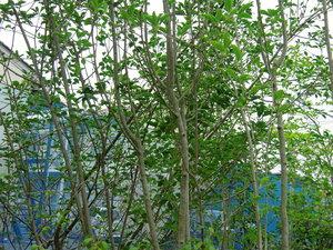 美しいお庭の演出に欠かせない庭木!おすすめの種類をご紹介します‼のサムネイル画像
