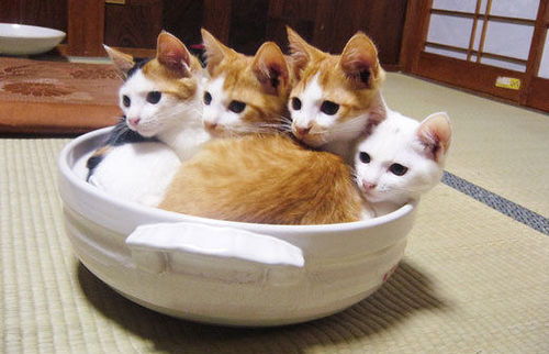 愛猫の為に用意してあげたい!おすすめのキャットタワーをご紹介☆のサムネイル画像