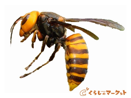 秋になると危険な蜂の対策について。刺されたら大変です!!のサムネイル画像
