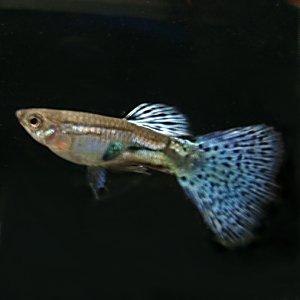 【アクアリウム初心者もOK】簡単にマスター出来る熱帯魚の飼い方のサムネイル画像