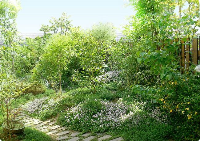 憧れの美しい庭造りに欠かせない、おすすめの庭木をご紹介しますのサムネイル画像