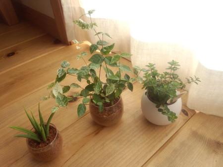 観葉植物が欲しくなったら無印良品のオンラインストアをチェックのサムネイル画像