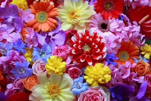 生活に潤いを与えてくれるお花♡ 人気の花をご紹介します!のサムネイル画像