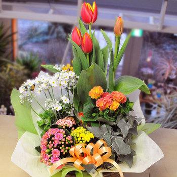 お花がきれいな春ですよ!鉢植えや寄せ植えでお花を育てましょう!のサムネイル画像