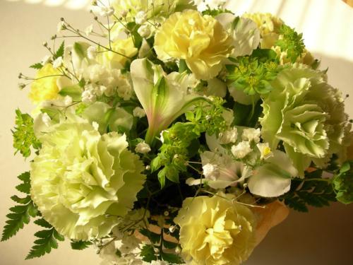 【園芸初心者必見】園芸初心者でも育て方が簡単な植物たち4選のサムネイル画像