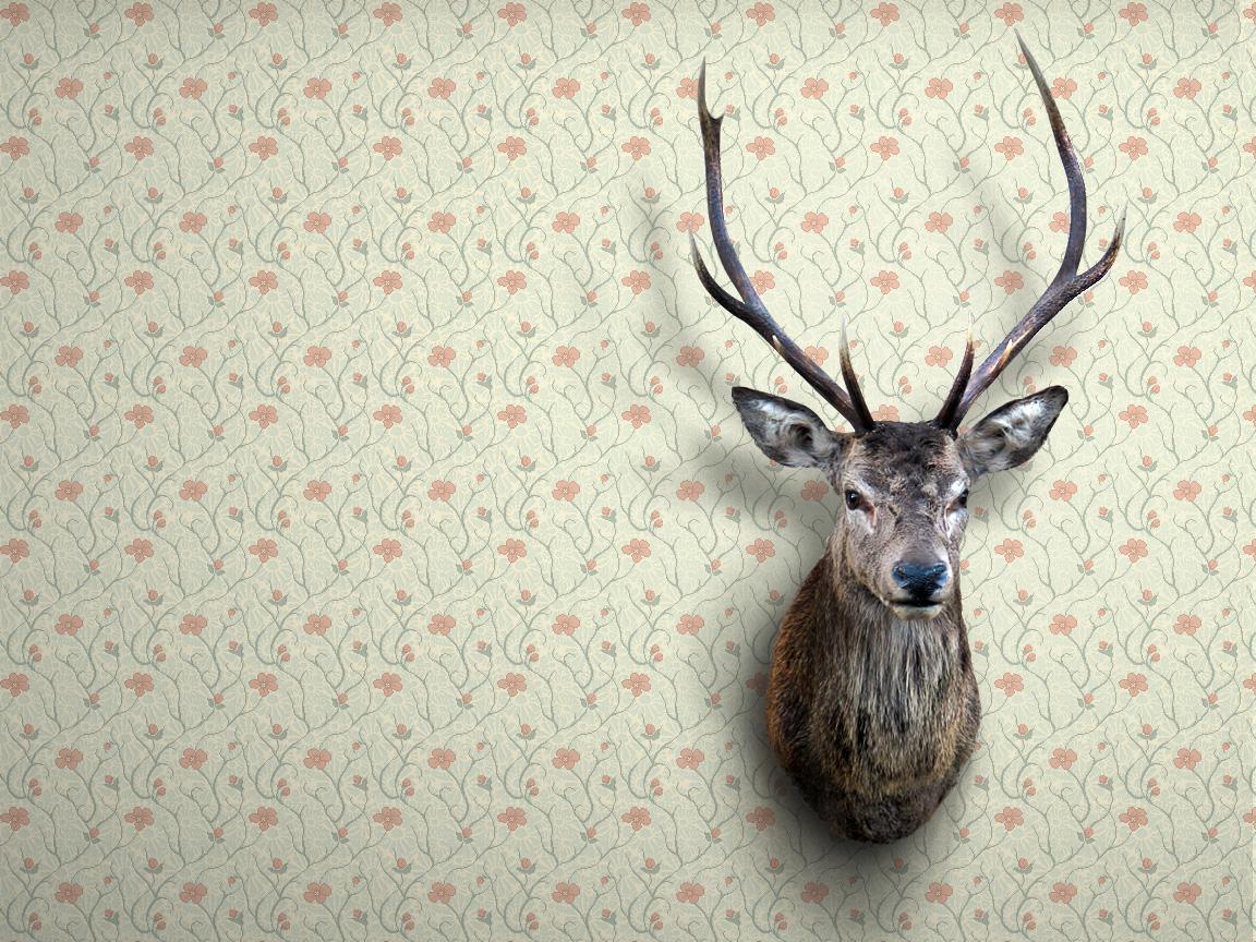 壁紙の基本的な選び方!お部屋ごとの壁紙選びのポイントを知ろう!のサムネイル画像