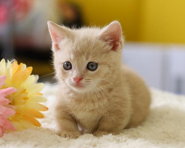 猫を飼うときに揃えるべきペット用品とは?必須の猫用品教えます!のサムネイル画像
