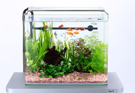 熱帯魚で癒されたい!インテリアとしても楽しめる水槽をご紹介!のサムネイル画像