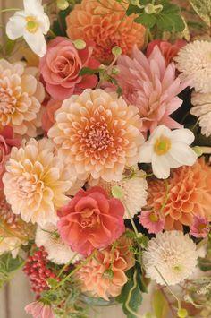 ベランダで花を育てたい! おすすめの花と気を付けるポイントのサムネイル画像