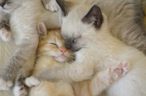 猫を飼う前に知っておきたい!後悔しない飼い主になるための24のことのサムネイル画像