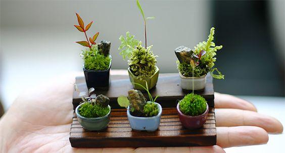 和を感じられる日本の伝統的な観葉植物。「盆栽」の作り方を知るのサムネイル画像