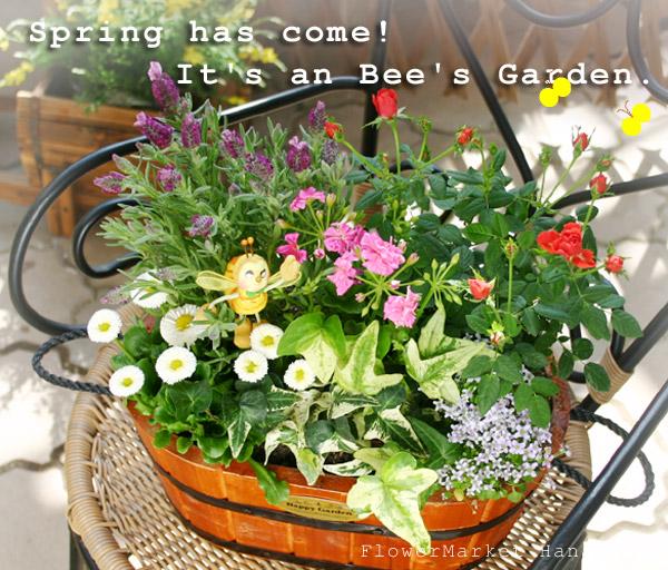 初心者さんいらっしゃい。春です。お花の寄せ植え楽しもう!のサムネイル画像