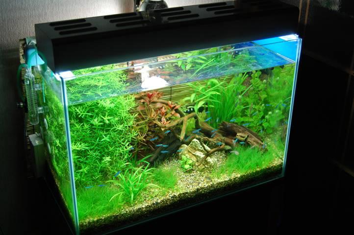 おすすめの水槽照明とは?今人気の水槽用の照明について紹介します。のサムネイル画像