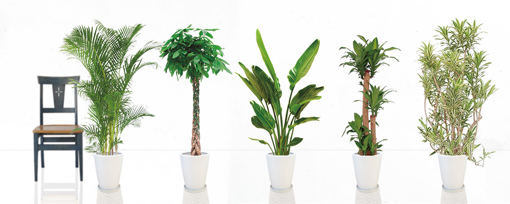観葉植物の種類や育て方、レイアウトなどの一覧を紹介しますのサムネイル画像