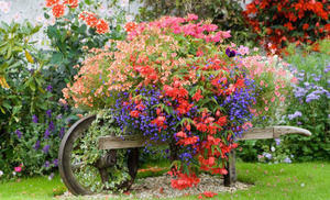お家のお庭を明るく華やかに♡お庭にぴったりなお花をご紹介します♪のサムネイル画像