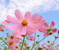 さあ、あなたも始めてみませんか?園芸で自分でお花を育ててみてはのサムネイル画像