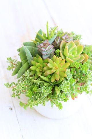 簡単にできる葉ざしでお気に入りのかわいい多肉植物を増やそう!のサムネイル画像