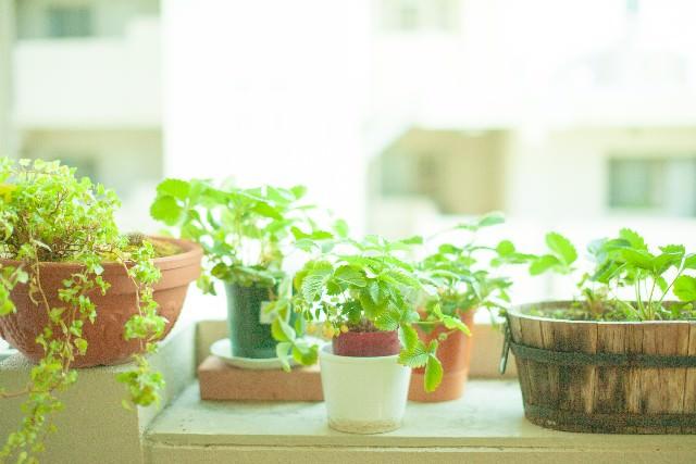 鉢選びまでこだわって!観葉植物でインテリアをレベルアップ♡のサムネイル画像