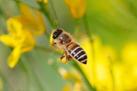 暖かくなってくると活動的になるハチたち。その種類と生態まとめ。のサムネイル画像