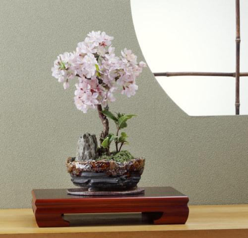 盆栽ライフをはじめよう! やさしい盆栽の育て方とおすすめの盆栽のサムネイル画像