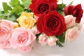 みごとな花を健康にのびのびと咲かせましょう! 美しい薔薇の栽培法のサムネイル画像