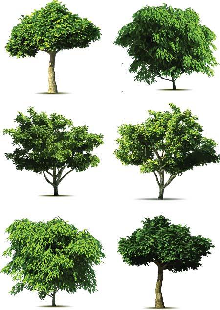 知っているようで知らない?!いますぐ役立つ樹木の種類教えます♪のサムネイル画像