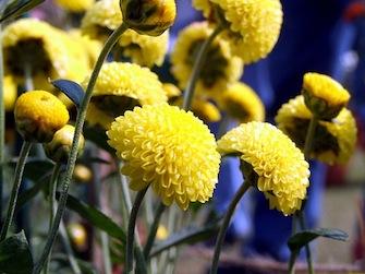 秋も深まる11月。11月に咲いている花はどんなものがあるの?のサムネイル画像