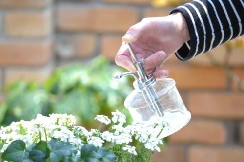 大事な観葉植物を育てるコツ!しっかりした水やりの方法を覚えようのサムネイル画像