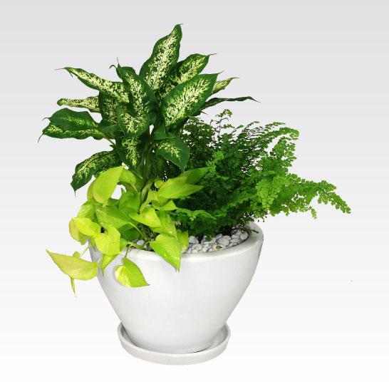 ベランダのちょっとしたインテリアに最適な鉢植えをご紹介いたしますのサムネイル画像