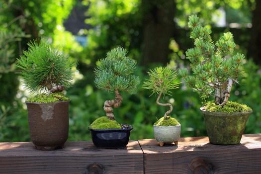 小さくてかわいいミニ盆栽♪簡単なミニ盆栽の作り方はこれ♪のサムネイル画像