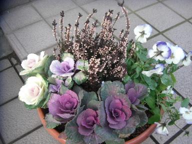 冬の寄せ植えにおすすめの植物6選♡寒さに強い草花で冬も寄せ植えをのサムネイル画像