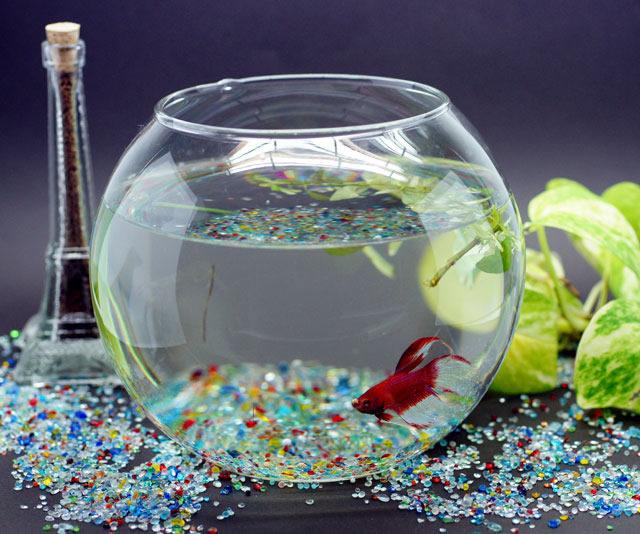 かわいくて綺麗な癒しの熱帯魚「ベタ」を飼育してみませんか?のサムネイル画像
