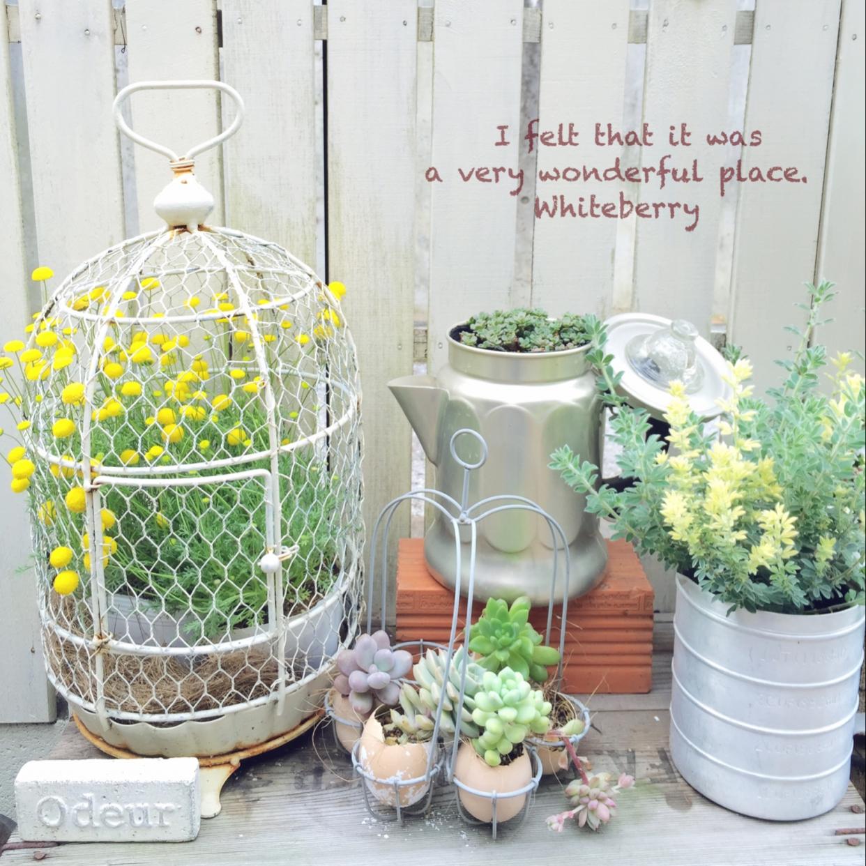 ガーデニングで色々なお花を育てて素敵なお庭にしてみたい♪ のサムネイル画像